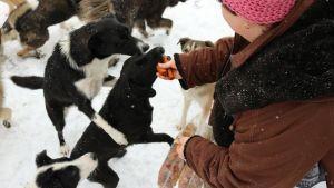 Tiina Nöjds hundar härstammar från Adina Olearus privata hundgård i Vulcana i Rumänien.