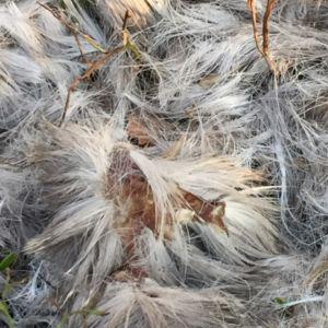 Sari Rinne stötte i skogen på Iniö på tre cirklar med 1 meters diameter, med djurhår. Håren var circa 7-10 cm. De lösrivna hudbitarna var 1cm.