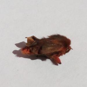 Vad är detta för en insekt som Birgitta hittade i Liljendal?