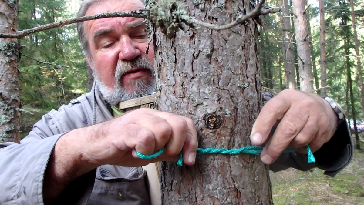 Naula elävään puuhun