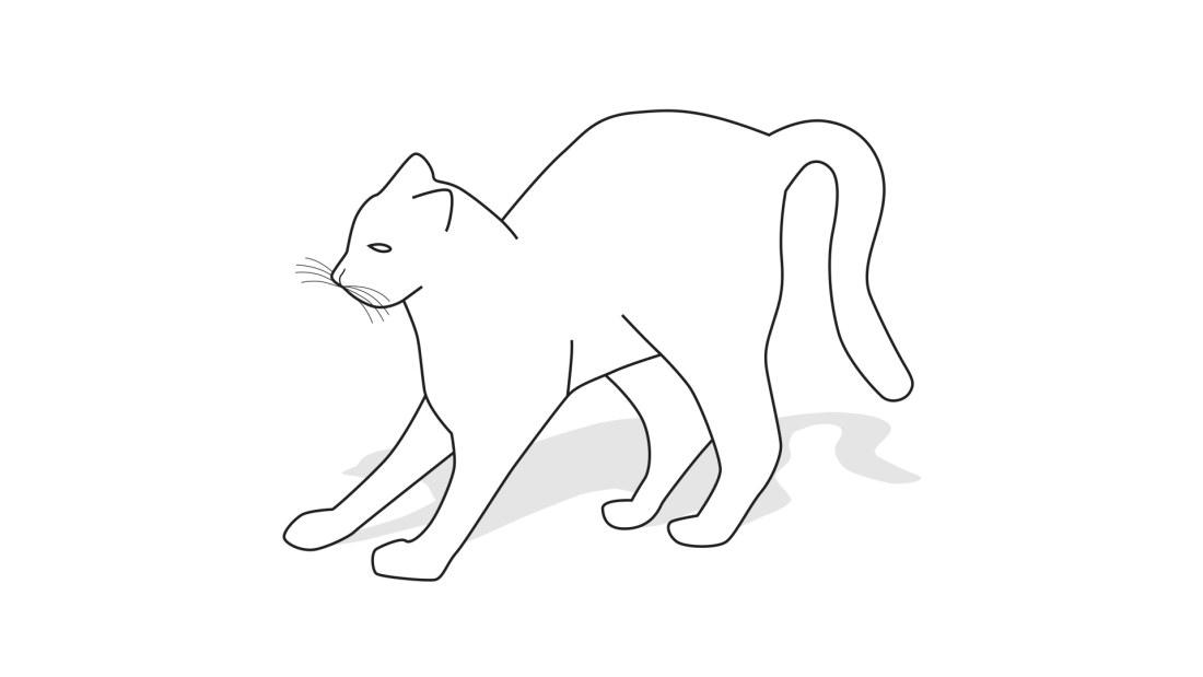 Kissa Lipoo Huuliaan