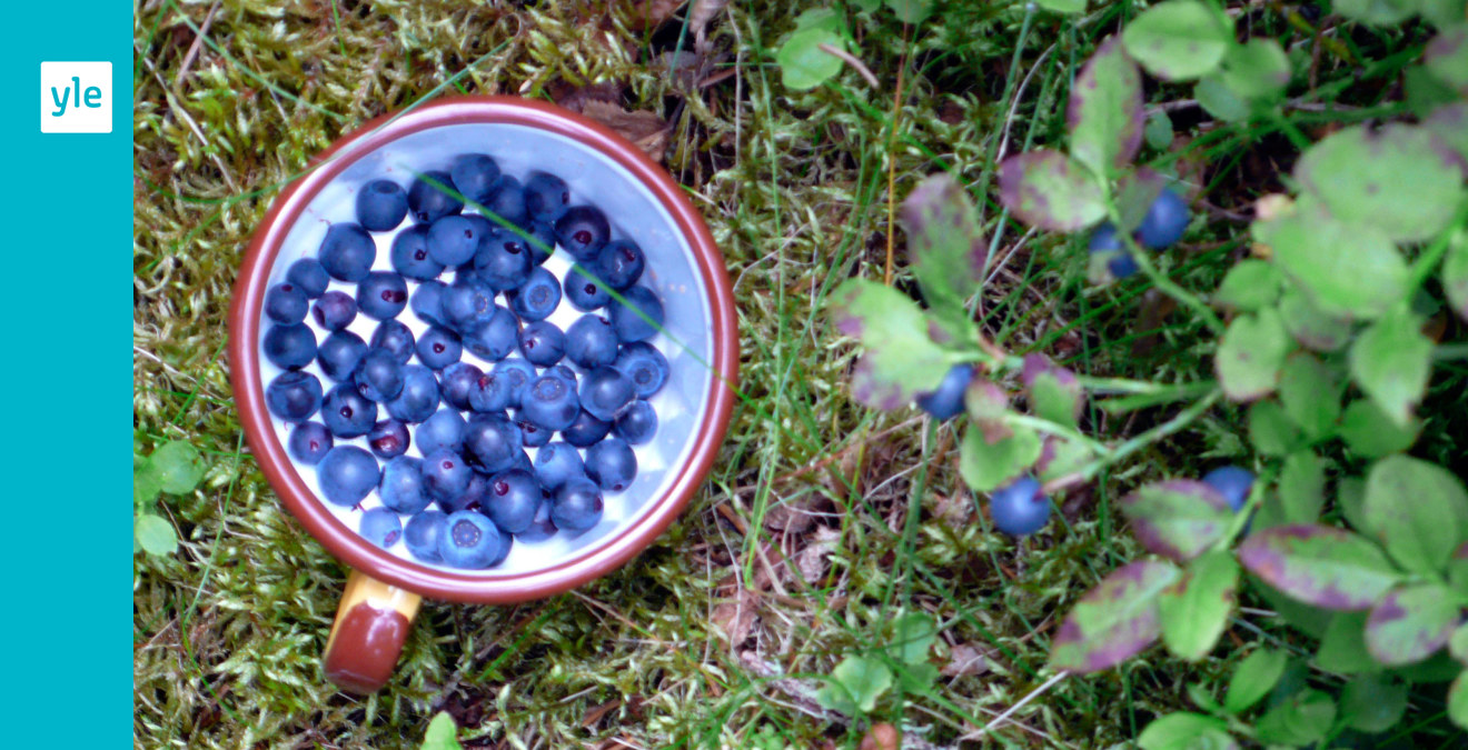 sälja blåbär pris