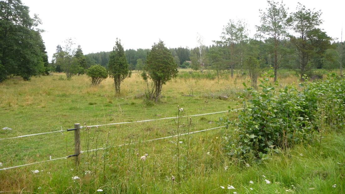 Besök på Åvensor i Korpo | Åboland | svenska.yle.fi