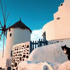Tuulimylly Santorinilla, etualalla kissa