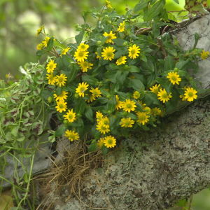 blommor som växer på en gren