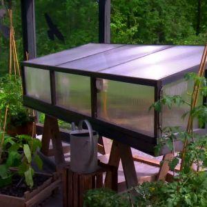 I den här plantkuvösen förodlas plantor som kräver mycket värme, ljus, fukt och näring