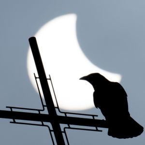 Solförmörkelse 20 mars 2015.
