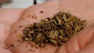 Den syntetiska drogen Spice, som är konstgjord marijuana.