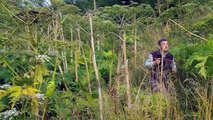 Jättiputkikasvustoa tiededokumentissa Vihreä uhka