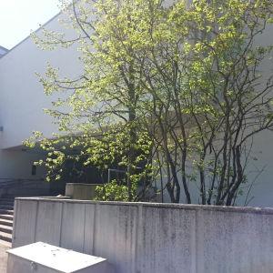 Gymnasium, Helsingfors
