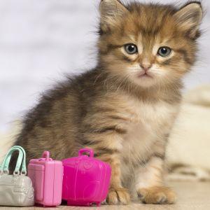 kattunge  med resväskor