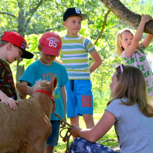 Barn samlade runt en kalv
