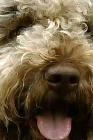 Kantarellhunden Viivi