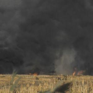 Ville Haapasalo ja Volga 30 päivässä, ruohikkopalo