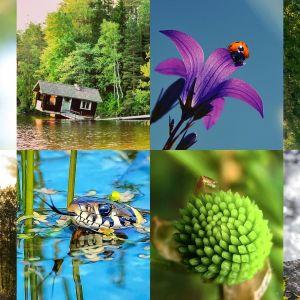 Årets naturbild - bidrag till sommarutmaningen