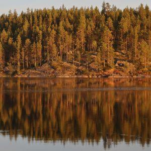 Metsäinen kalliosaaren ranta kohoaa peilityynen järvenpinnan taustalla. Ilta-aurinko maalaa metsän lämpimän oranssiksi, metsä heijastuu kuvajaiseksi vedenpintaan.