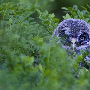 Tarinoita metsästä kertoo suomalaisen metsäluonnon kauneudesta ja esittelee monimuotoisen vanhan metsän luontoa sekä asukkaita.