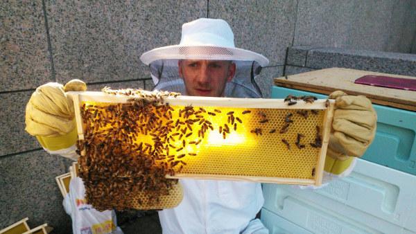 tutkija Lauri Reuter nostaa mehiläiskennostoa
