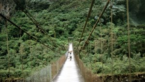 Många företag lovar plantera ett träd i till exempel den här regnskogen i Ecuador om du köper just deras produkt. Bild: YLE/Jussi Mankkinen