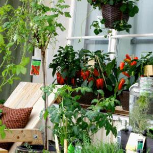 Keudan floristiopiskelijoiden hyötypuutarha parvekkeella.