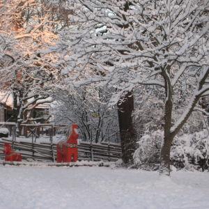 Isoja taalainmaanhevosia talvisella Skansenilla.