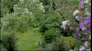 En vacker trädgård i Kristinestad.