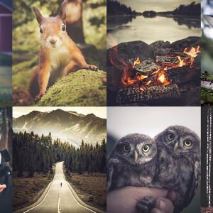 Kollage av Konsta Pulkkas naturfotografier