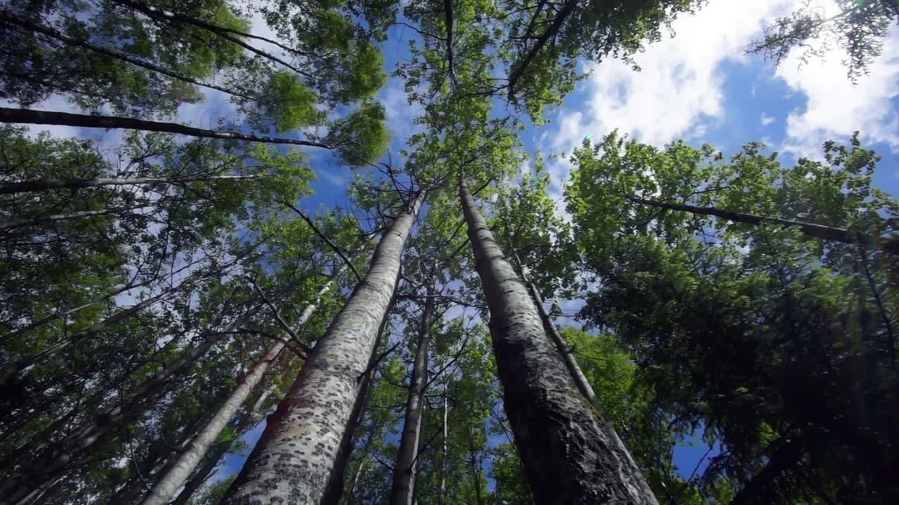 Elävät Puut