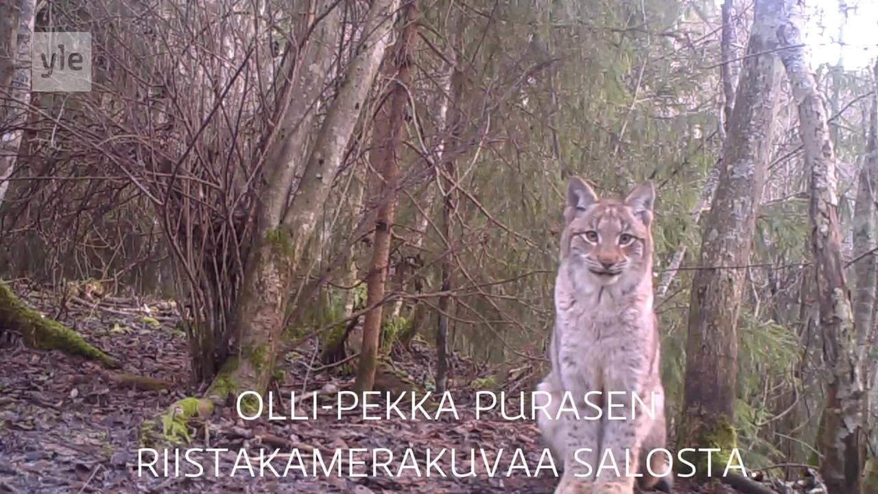 Lappi Yle Uutiset