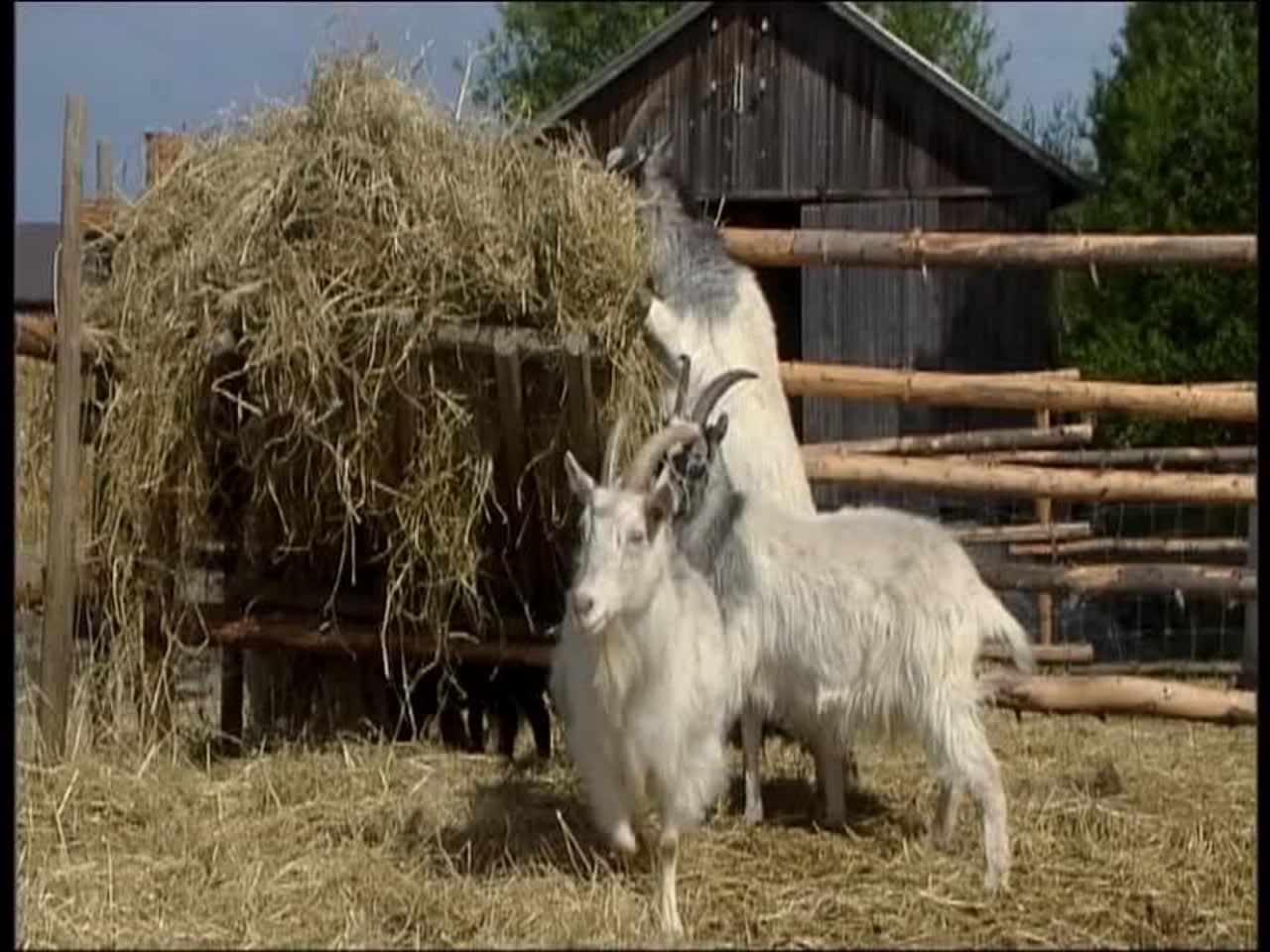 Eläintenpäivä