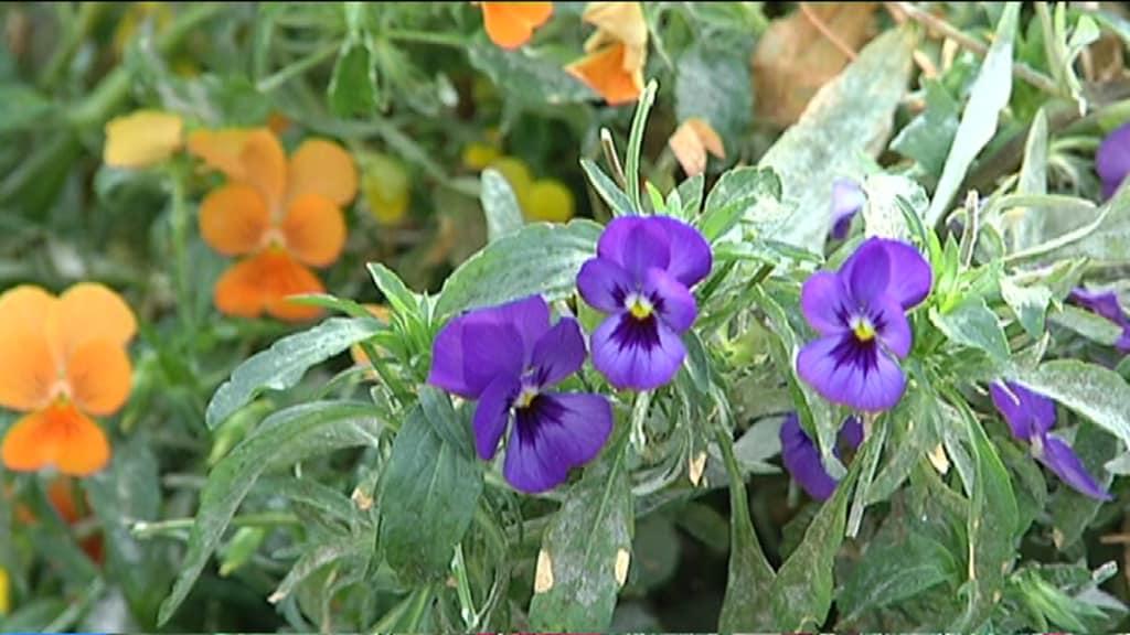 Suomalaiset Kukat