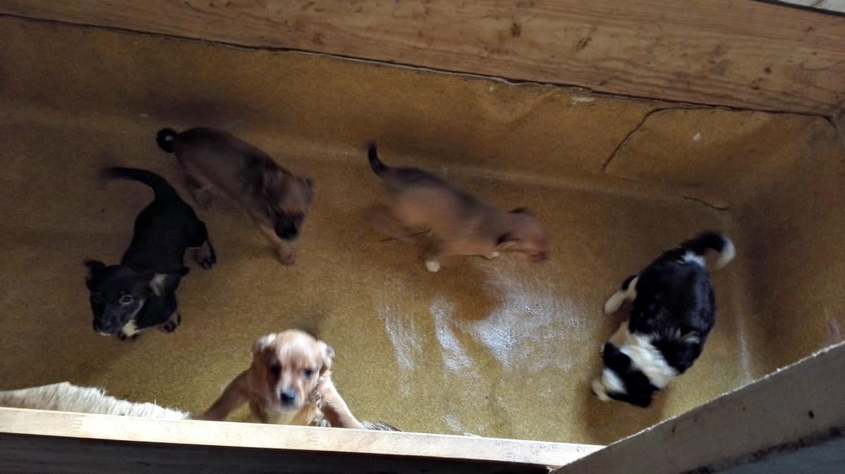 Koiranpentuja Pirkanmaa
