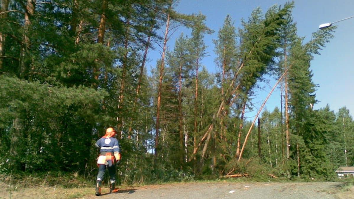 Myrskyvahingot maksoivat hunajaa Pohjolalle | Yle Uutiset | yle.fi
