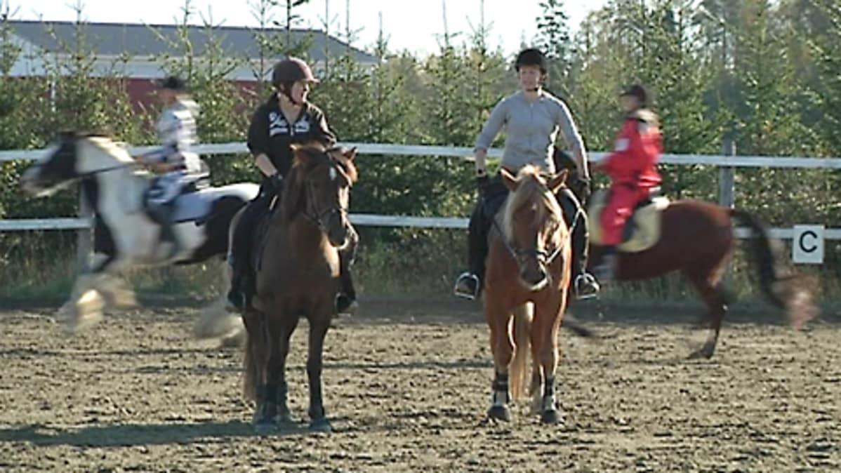 Erityisjärjestelyt pelastavat ammatillisen koulutuksen Perhossa? – Nuorten hevosalan koulutus ...