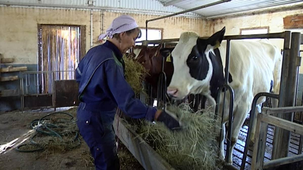 Maatalouslomittaja