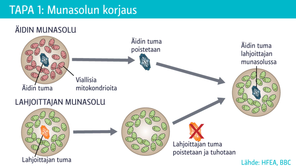 Mitokondriosairaus
