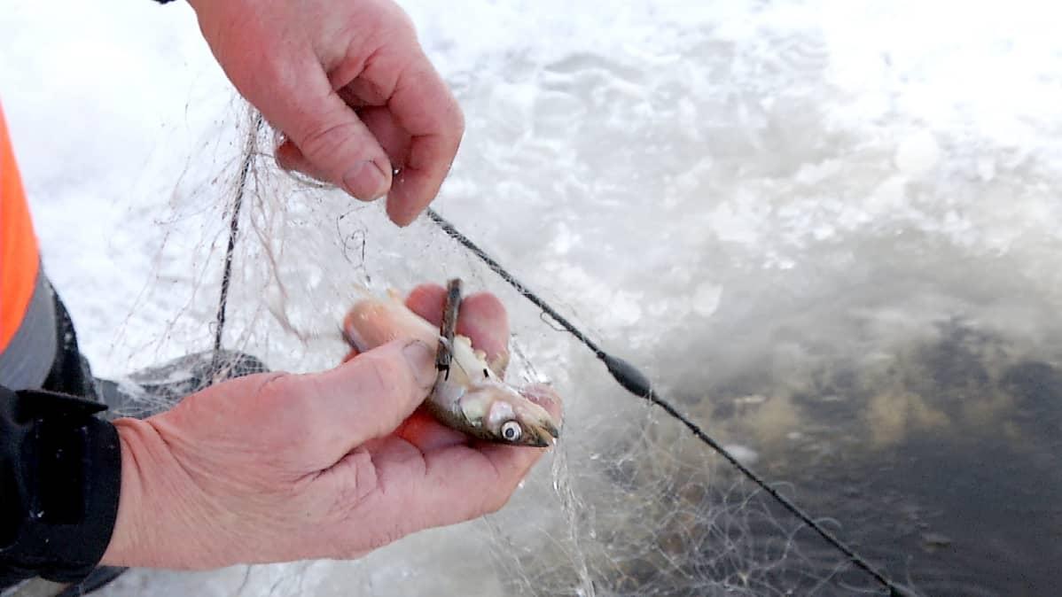 Kalastonhoitomaksu Sakko