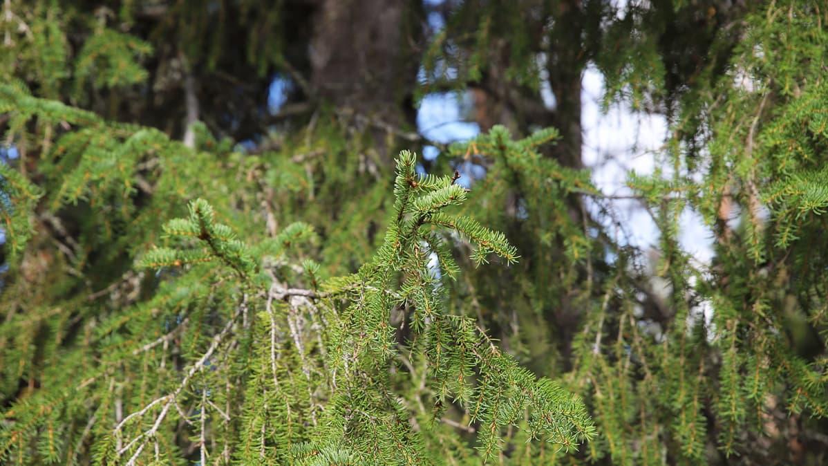 Metsän Keskihinta