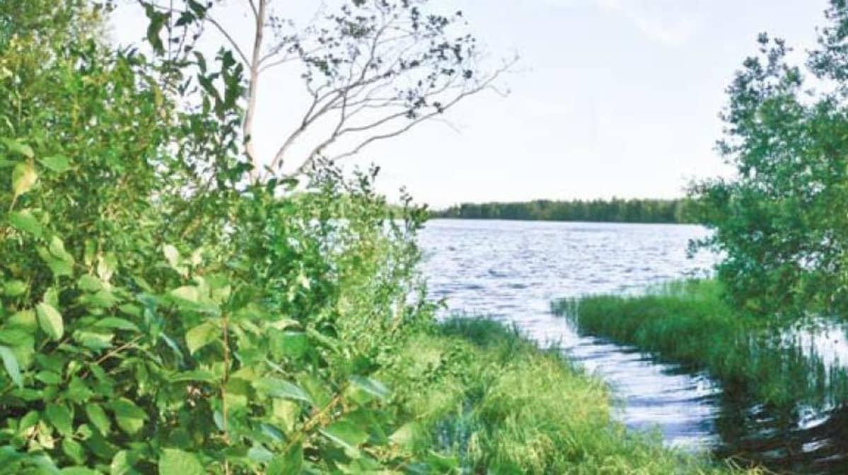 Tukkisaari Oulu