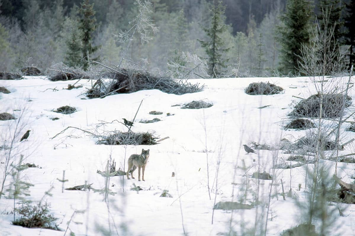 Susia Suomessa