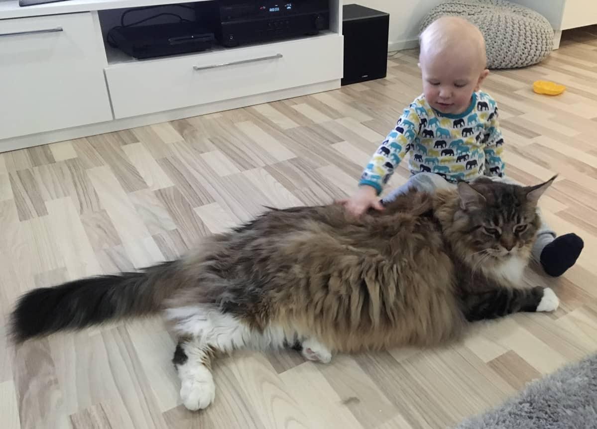 Kissa Nuolee Ihmistä
