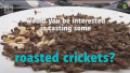 "Video: Uutisvideot: ""Gold rush"" for cricket snacks startup as Finland legalises edible insects"