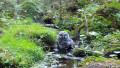 Видео: Viirupöllö kylpee purossa