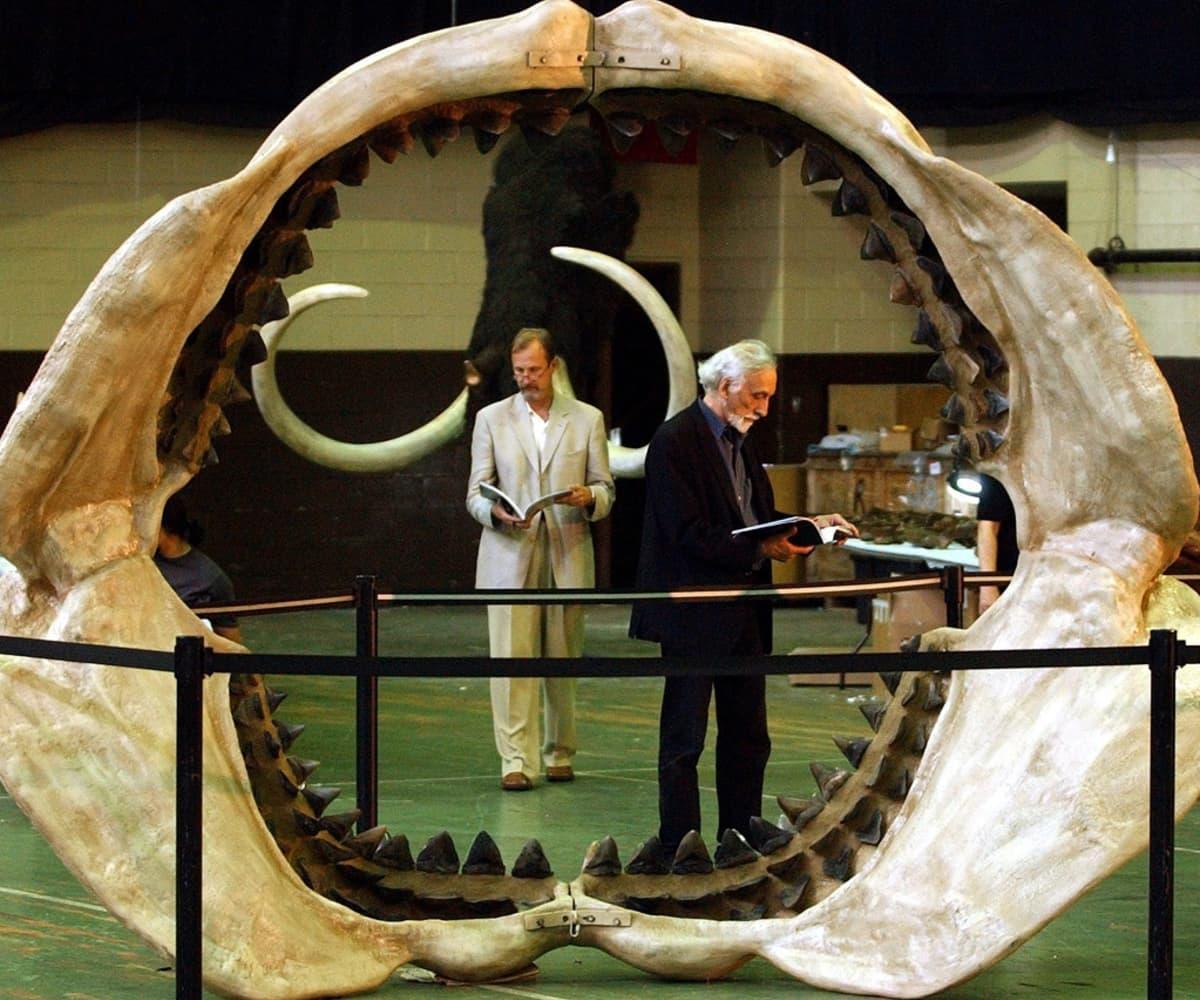 Kaksi miestä kuvattuna megalodonin ammottavien leukaluiden välitse.