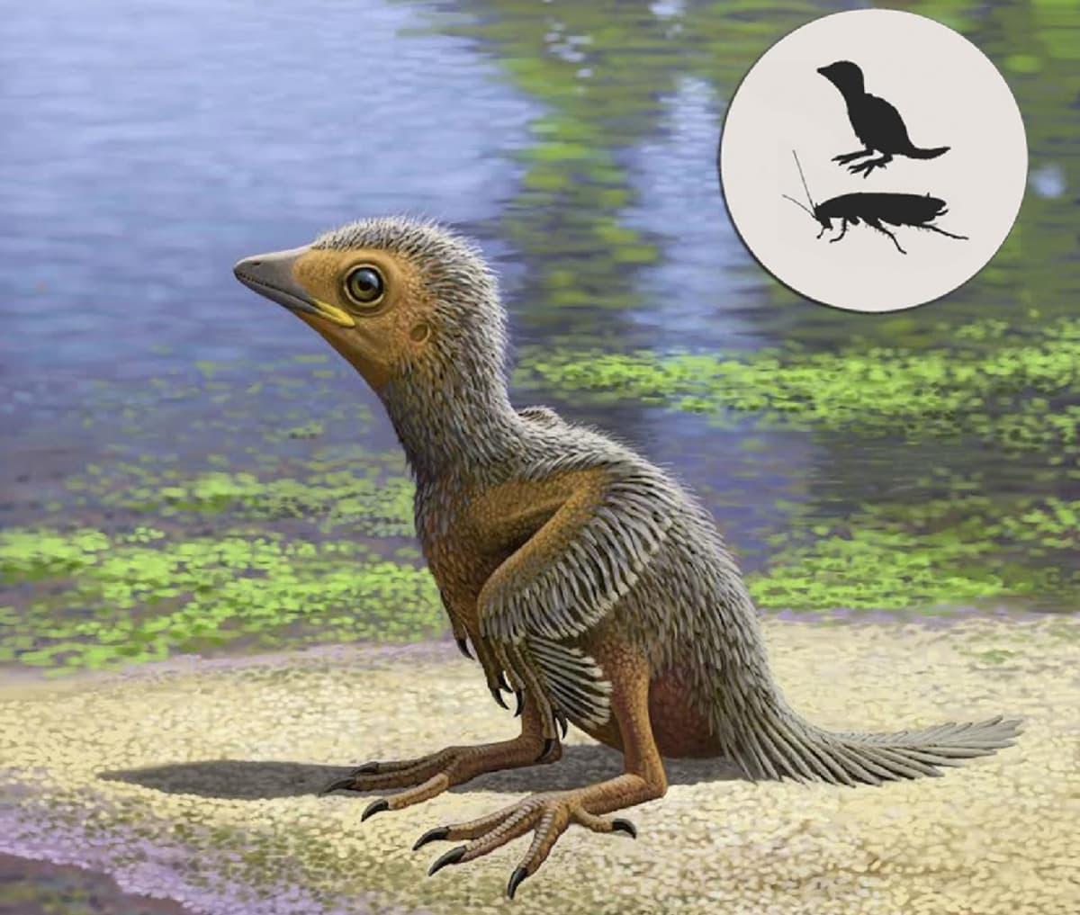 Piirroskuva linnunpoikasesta. Pienet silhuettikuvat vertaavat poikasen kokoa suureen hyönteiseen.