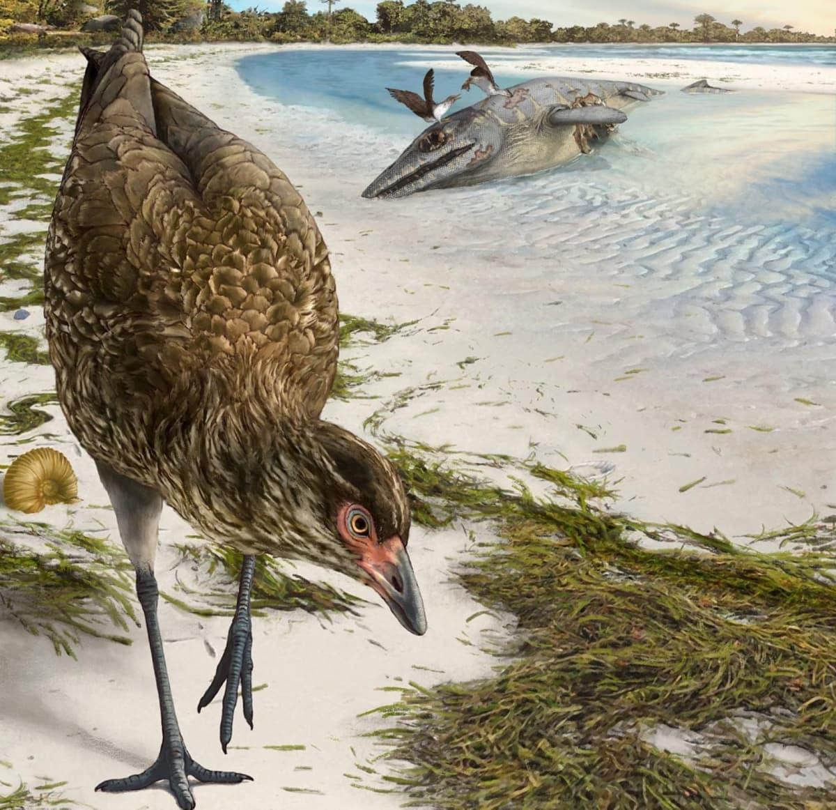 Piirros hiekalla astelevasta pitkäjalkaisesta linnusta, taustalla kaksi lintua nokkii ison meriliskon ruhoa.