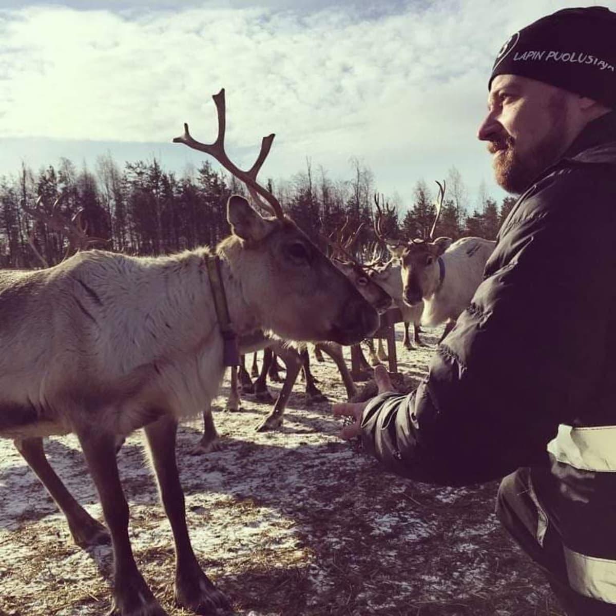 Mikko Kärnä kampanjoimassa poroaidalla Ranualla huhtikuun alussa 2019.