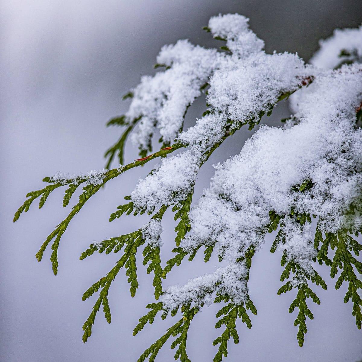 Lunta puun oksalla.