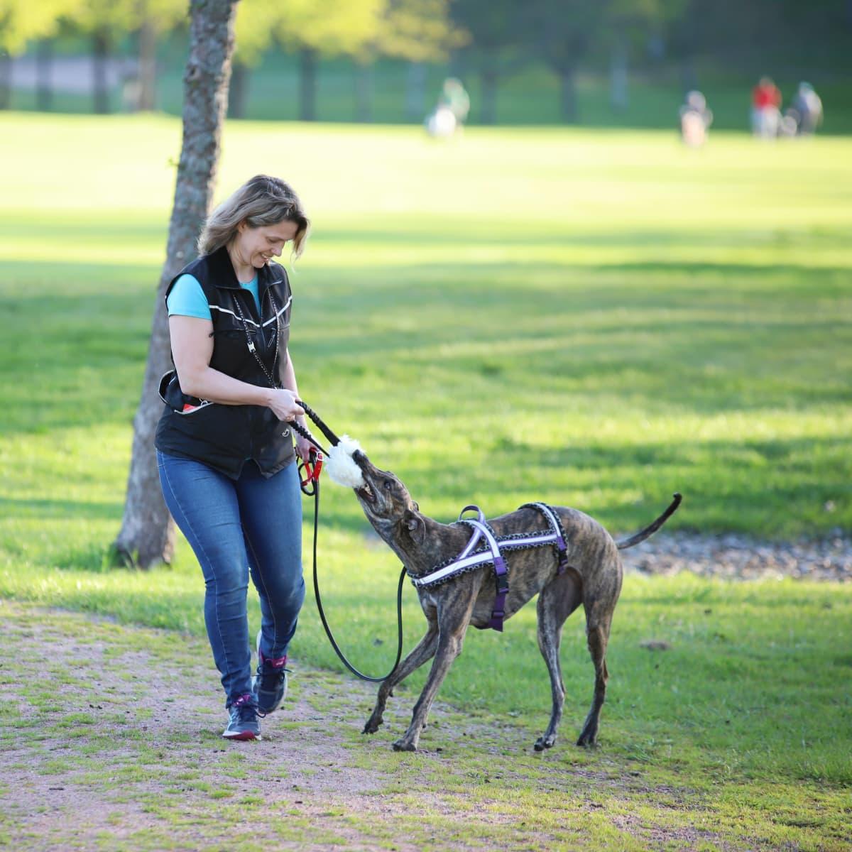 Nainen leikkii koiran kanssa golfkentällä