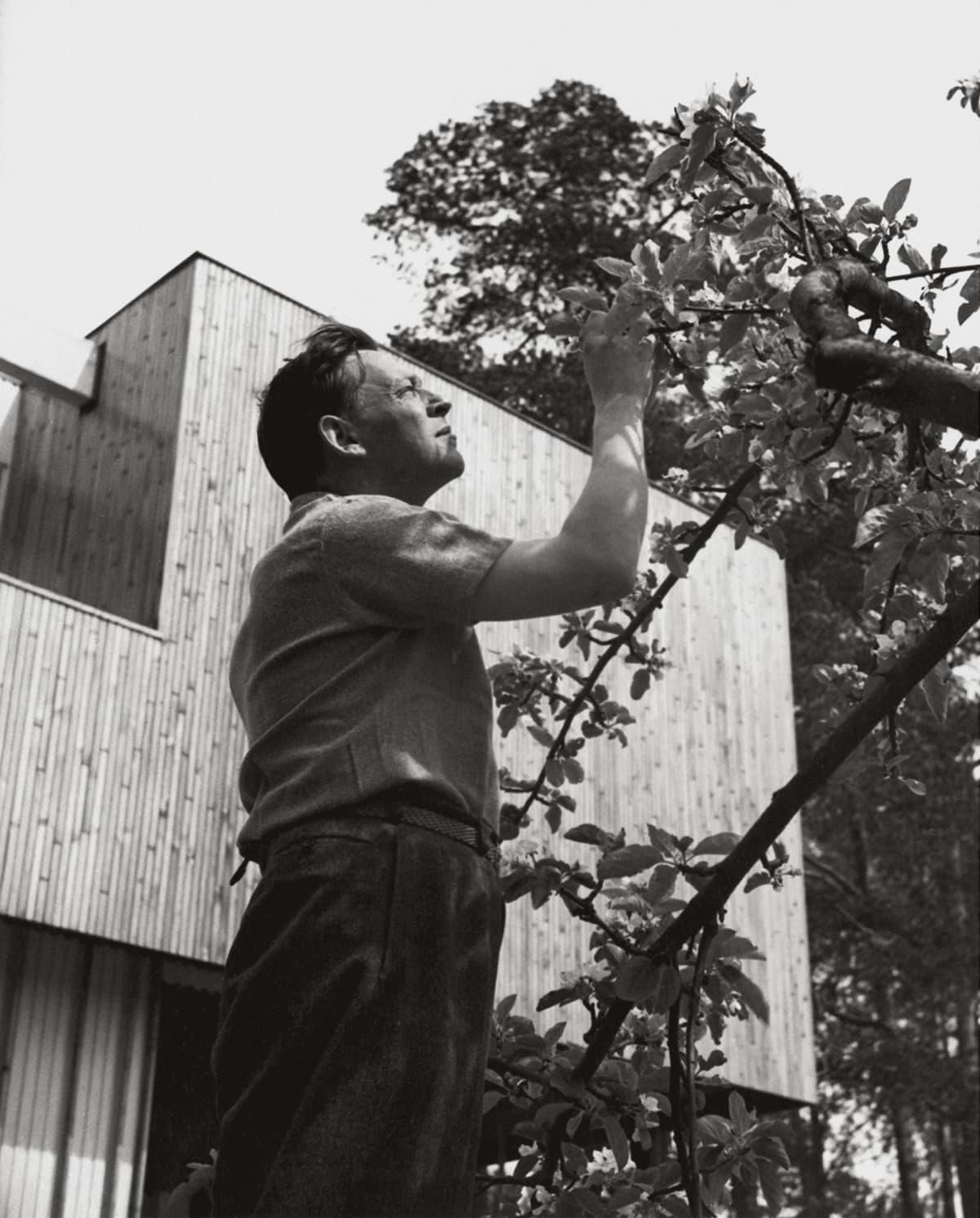 Alvar Aalto kotipihallaan